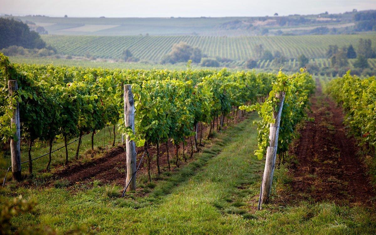 Už se vám sbíhají sliny? Však je na co. Váš zážitek ještě umocní, když si sklenku vychutnáte přímo na vinici. Od června do září je na úpatí kopce otevřený dřevěný stánek, kde si můžete víno koupit a zvolna jej povalovat v ústech, zatímco se budete vyhřívat na slunci a kochat pohledem do kraje. | © Eva Kořínková