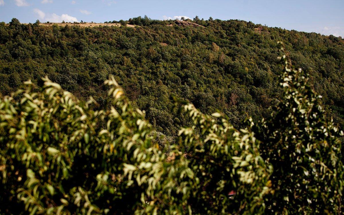 Doporučujeme prodloužit váš výlet ještě o pár kilometrů jižněji k Vinařické hoře. Ta je pozůstatkem třetihorního stratovulkánu a dnes je chráněna jako přírodní památka díky výskytu vzácných teplomilných rostlin. Během sopečné aktivity vznikla v tomto místě dlouhá puklina hluboká asi 700 m a když v minulém století štoly nedalekého kamenouhelného dolu Mayrau zasáhly hluboko pod horu, byly objeveny různé geologické kuriozity, např. přirozenou cestou zkoksované uhlí v místech, kde žhavé magma kdysi přišlo do styku s uhelnou slojí. Na vrcholu hory užasnete nad výhledem na Krušné hory, Říp a četné vrcholy Českého středohoří. | © Eva Kořínková
