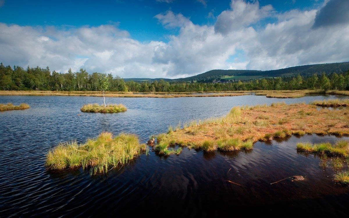 Kromě ledovcových jezer jsou typickým šumavským krajinným prvkem rozsáhlá rašeliniště, nazývaná slatě. Jsou to nehostinná, chladná místa, která svým ponurým tichem, hrozivě černým zbarvením četných tůní a bažin a mnohdy až strašidelnou atmosférou inspirují k temným báchorkách a při podzimních nečasech potěší srdce nejednoho melancholika. | © Dreamstime