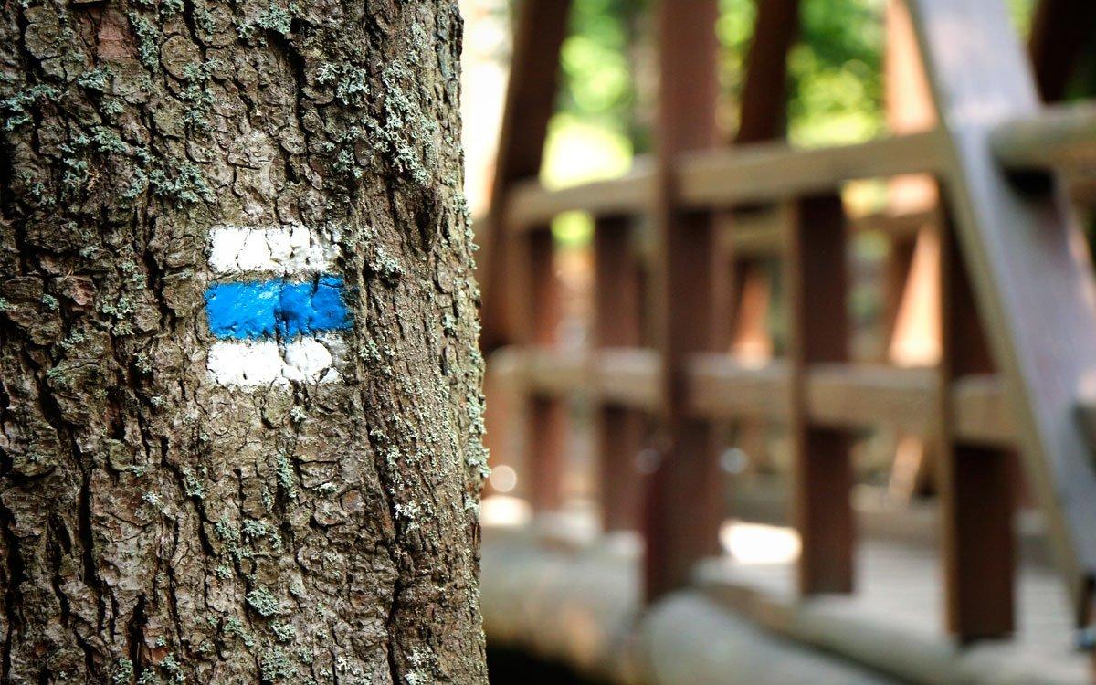 Na pouhých třech kilometrech po modré turistické značce se během dvaadvaceti zastavení naučné stezky seznámíte s místní historií i přírodními zajímavostmi. | © sius