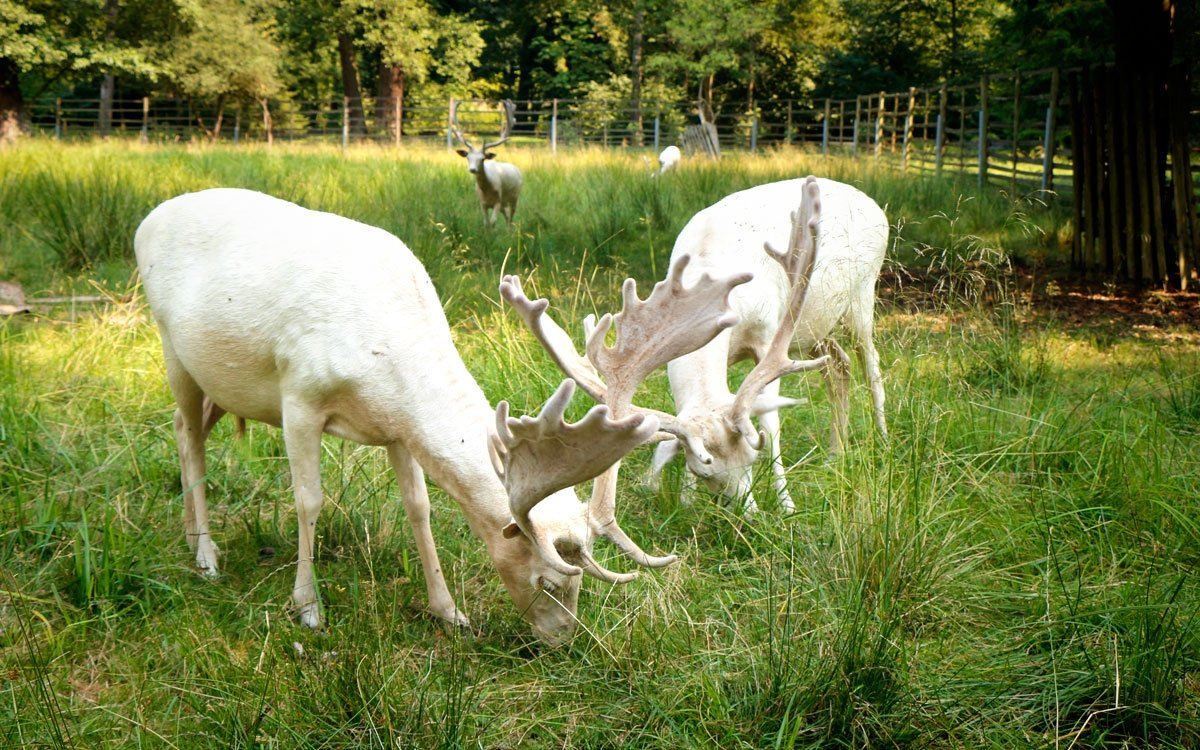 Anglický park o rozloze přes čtyřicet hektarů, obklopující zámek Častolovice, dělá z celého panství oázu klidu a odpočinku. Ke vznešené atmosféře tohoto místa přispívá také obora s bílými daňky a jeleny sika Dybowského. | © sius