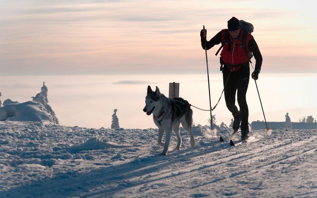 Orlické hory jsou oblíbeným tréninkovým místem musherů se psími spřeženími. Každoročně se tu ale také koná několik závodů. | © Vurbasek, Dreamstime