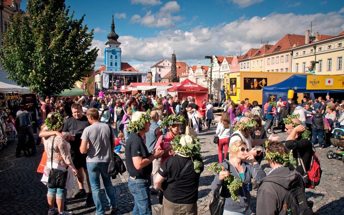 Chmelnice na Žatecku patří neodmyslitelně ke zdejší krajině a i přes malou rozlohu Česka jsou čtvrté nejrozsáhlejší na světě. Není proto divu, že stejně jako tradiční vinařská města pořádají vinobraní, začátek září je v Žatci každoročně zasvěcen Dočesné – slavnosti chmele a piva s nejdelší tradicí v Česku. | © Dreamstime
