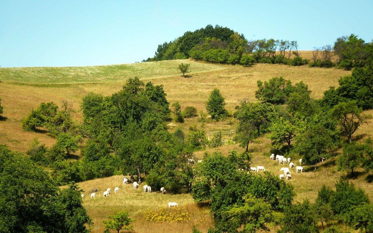 Okolí Jasenné je nádherné v každé roční době. Naučné a turistické stezky Vizovických vrchů vás provedou i po dalších vzácných lidových stavbách v okolí, dovedou vás k mnoha rozhlednám, muzeu motocyklů v Senince, známým Pulčínským skalám či památným stromům v regionu, představí folklorní tradice, pasekářský způsob života místních obyvatel i slavné rodáky (například Jana Kobzáně v Liptále) a v neposlední řadě i tajemné pověsti, které se vážou k některým místům. | © Jitka Slavíčková