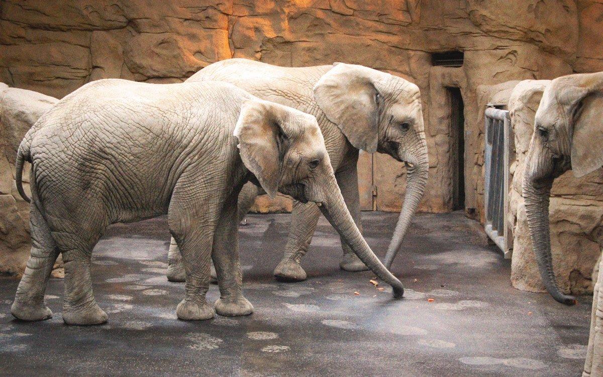 Napříč kontinenty se ve Zlíně můžete vydat také do zoologické zahrady v okolí zámku Lešná, jejíž historie sahá až do roku 1804. Vedle afrických slonů či nosorožců patří k jejím největším lákadlům výběh pštrosů emu a klokanů, kde vás od zvířat nedělí žádné bariéry.