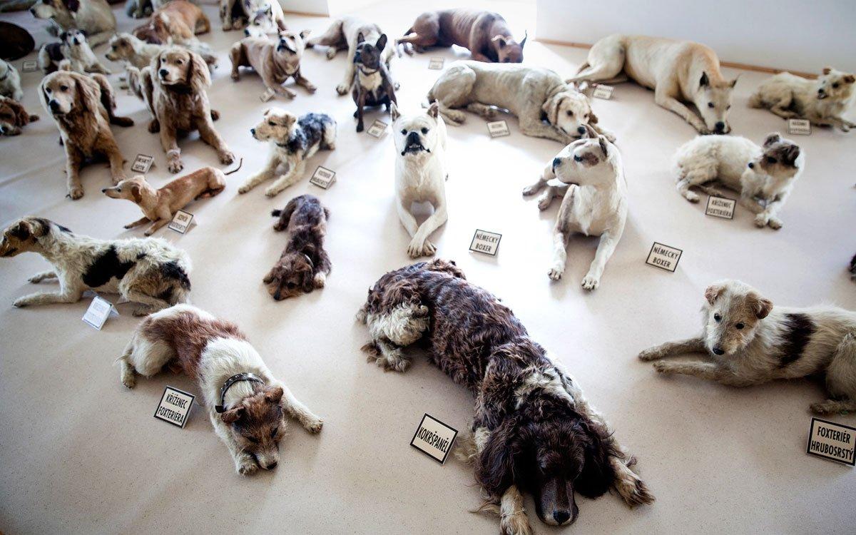 Legendární se stala baronova láska ke psům. Hradní bránu hlídala šestice dog. Psinec na bítovském hradě čítal až 200 psů nejrůznějších ras a jejich evidence i veškeré výdaje na jejich chov na hradě byly poctivě vedeny v účetních knihách. O psy se staral početný, vyškolený personál a psi měli na hradě i vlastní kuchyni. Existoval dokonce pravidelný program, podle kterého se vždy v sobotu měla měnit sláma, psi byli koupáni černým mýdlem, někteří údajně měli i svůj ručník. | © Eva Kořínková