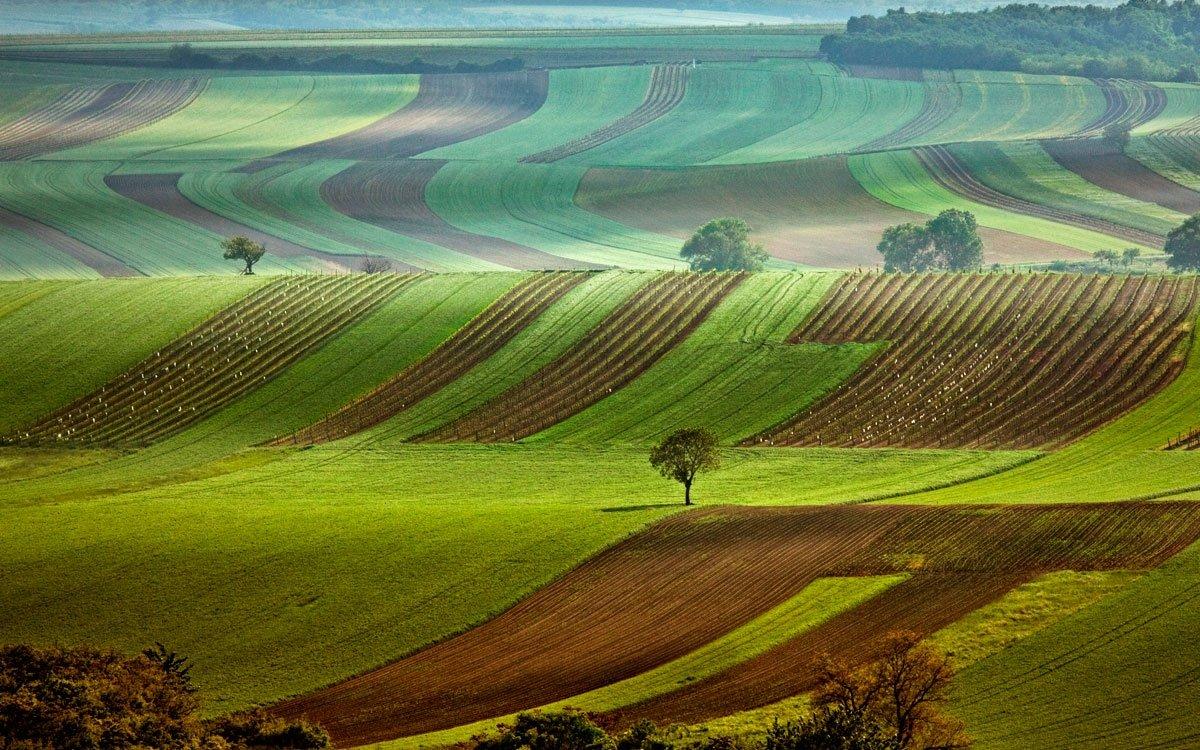 Valticím se říká hlavní město vína – a pokud se sem vypravíte, zjistíte, že rozhodně nejde o nadsázku. Kromě Salonu vín, několika vinoték a vináren tu najdete například vinařské muzeum a střední odbornou školu vinařskou, můžete také navštívit zajímavé podzemí a projít se po naučné vinařské stezce. Okolí města totiž nabízí jedny z nejlepších podmínek pro pěstování vinné révy v Česku. | © Ivanka Čištínová, archiv CzechTourism