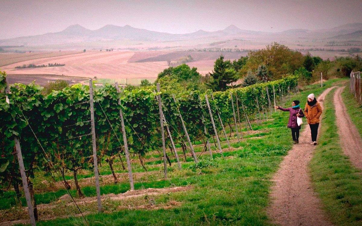 Procházka vinicemi z Litoměřic do Velkých Žernosek je pěkným, nenáročným výšlapem. | z archivu seriálu Lovci zážitků