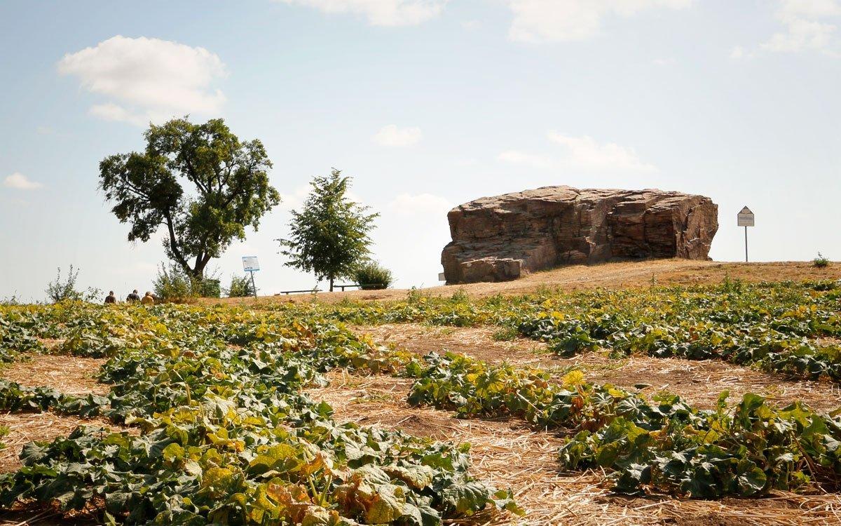 Lechův kámen je součástí rozsáhlého návrší Stará Kouřim, osidlovaného již od 5. tisíciletí př. n. l. Největšího významu dosáhla Stará Kouřim v 9. století a v první polovině 10. století, kdy zde stála mohutná slovanská pevnost o celkové rozloze 44 hektarů. Celou lokalitu, strategicky položenou na kopci nad řekou Výrovkou východně od Kouřimi, si můžete projít po naučné stezce Stará Kouřim. | © sius